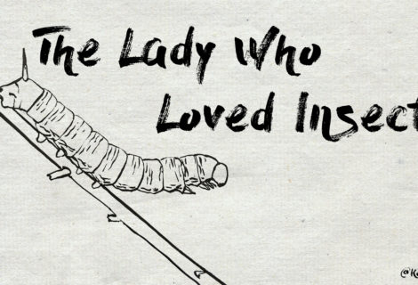 The Lady Who Loved Insects