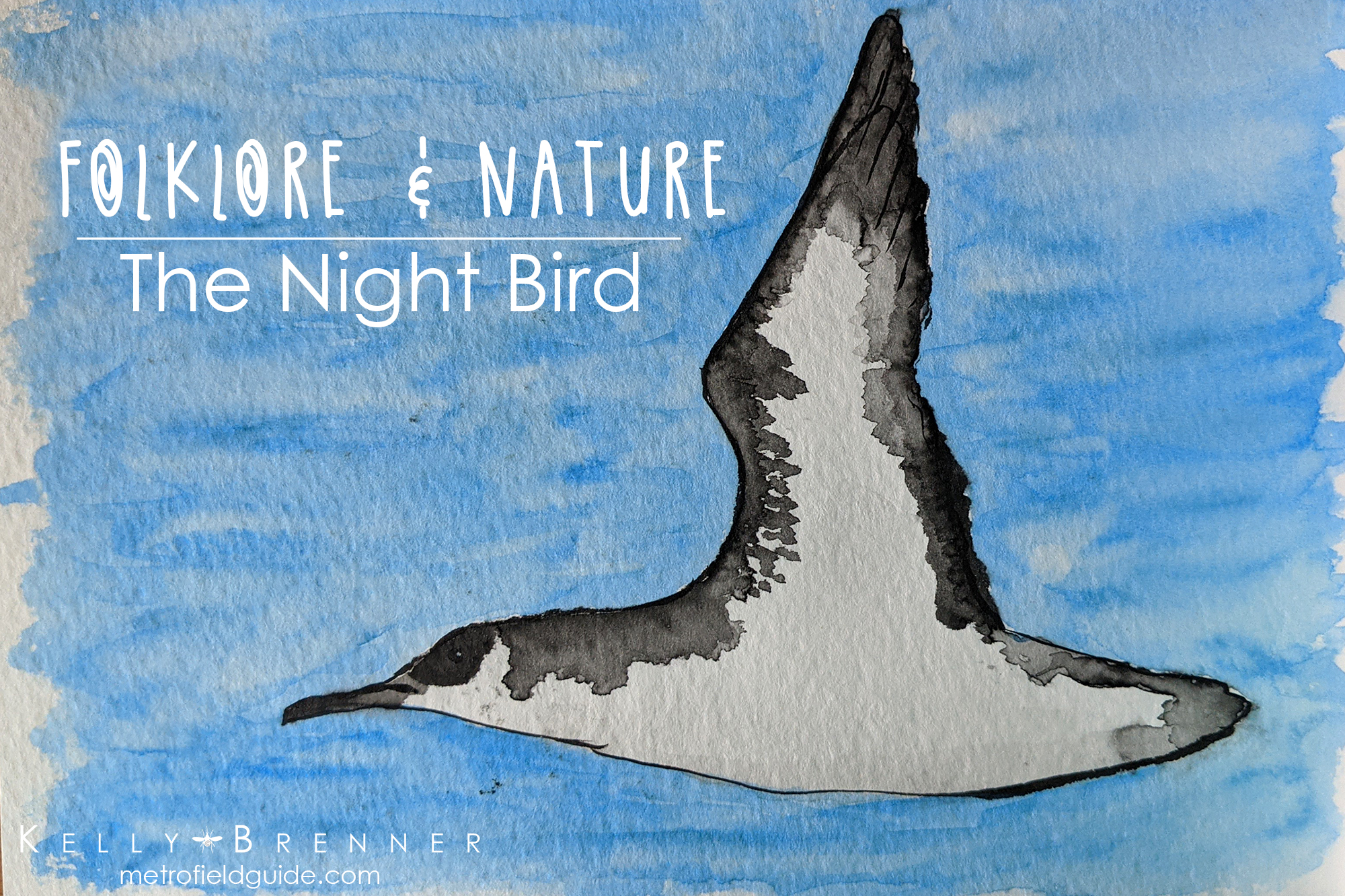 Folklore & Nature: The Night Bird