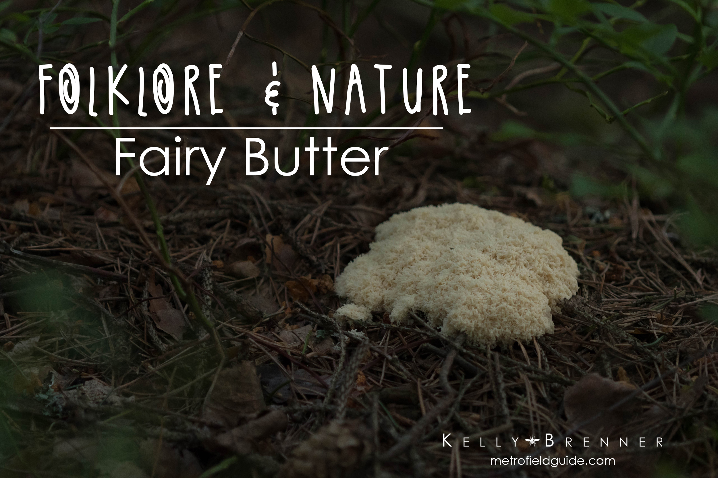 Folklore & Nature: Fairy Butter