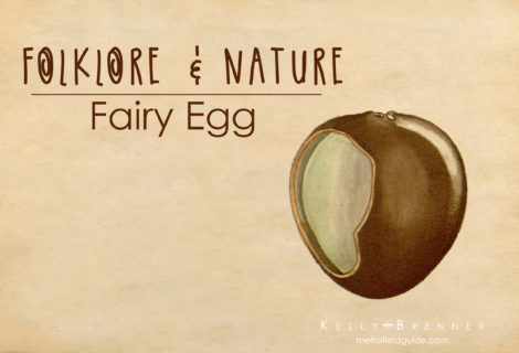 Folklore & Nature: The Fairy Egg