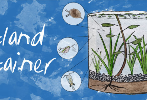How to Make a Wetland Container