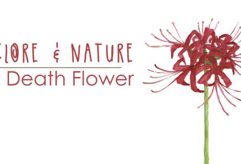 Folklore & Nature: The Death Flower