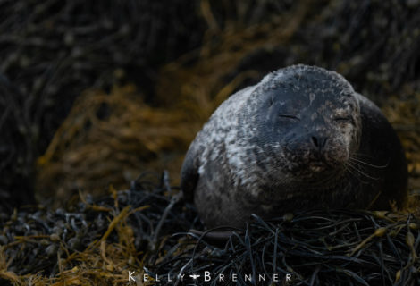 Poem of the Week: Seal Lullaby