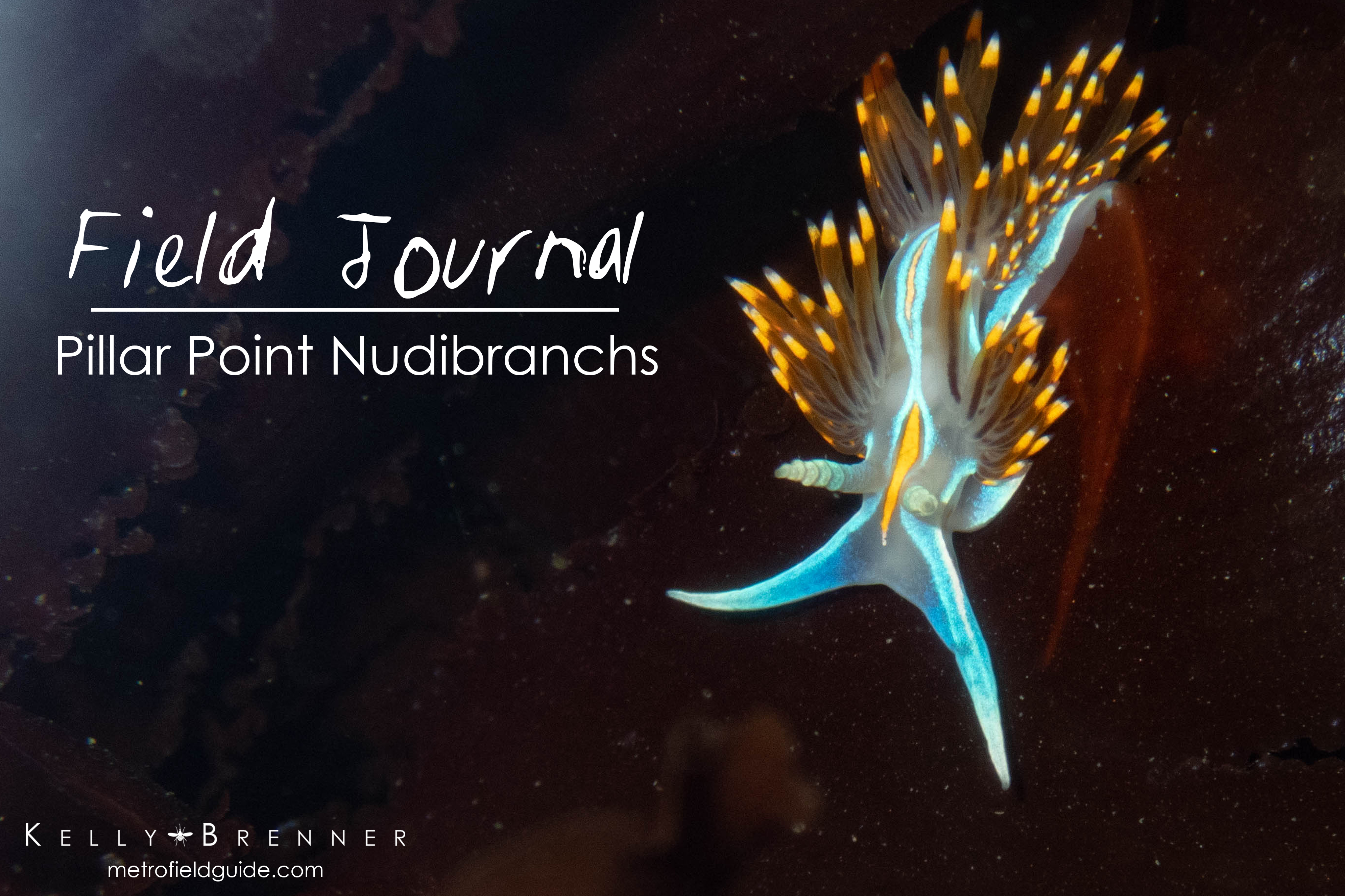Field Journal: Pillar Point