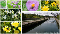 Ballard Locks and Botanical Garden