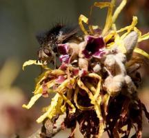Native Plants & Wildlife Gardens Blog Roundup
