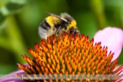 Why? Ecosystem Services:: The Pollinators