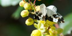 Design for Moths