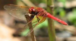 Design for Dragonflies