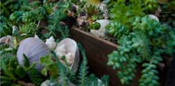 Northwest Flower and Garden Show 2011
