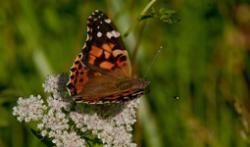 Design for Butterflies Resources