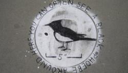 Environmental Art:: Elkology