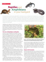 Featured Design Resource:: Reptiles and Amphibians in your backyard