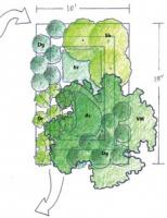 Rain Gardens and Wildlife Ponds