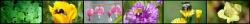 New Regional Plant List Resources