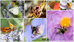 National Pollinator Week:: Roundup of Posts